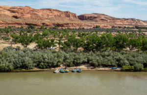 5 rafts tied up on a shoreline of the San Juan River with trees and rocks in the background under a blue sky while Floating the San Juan River Rafting trip